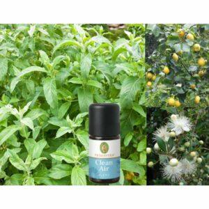 Pebermynte citron og myrtle olie